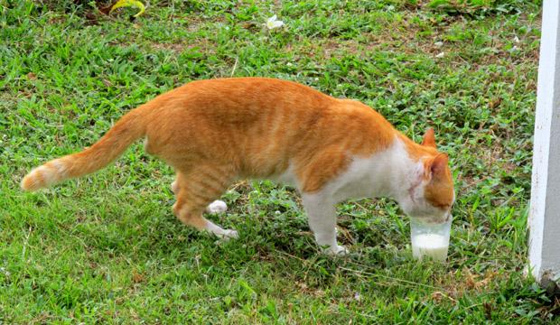 кот на Ко Панган