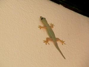 Смешной геккон