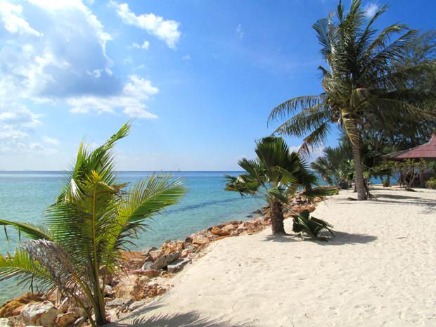 пальмы на Пангане