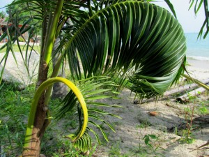 один из пляжей Пангана