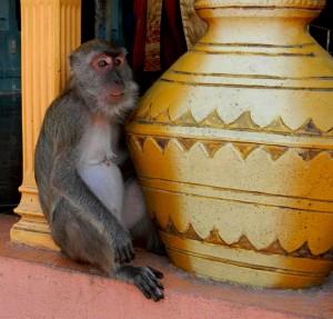 monkey-kuvshin