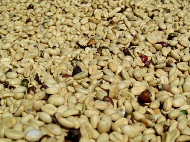 кофейные плантации Паксе