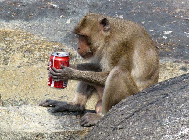 обезьяны Такиаба