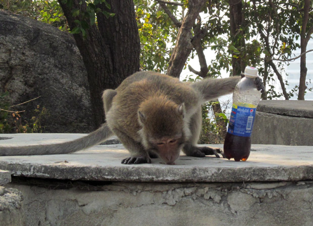 обезьяны Хуа Хина