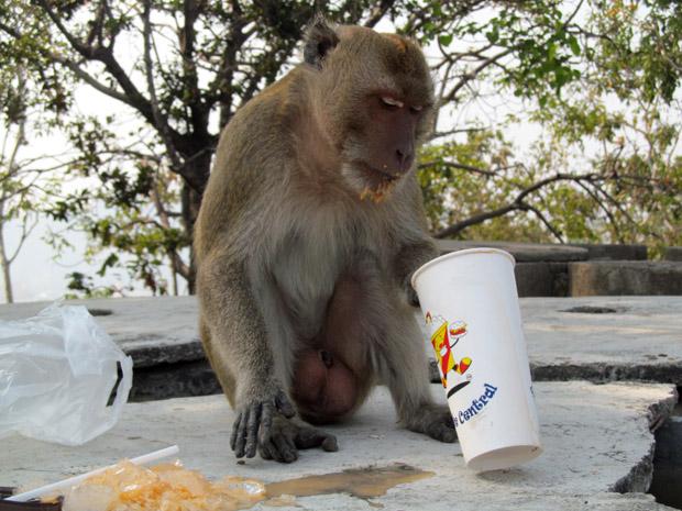 обезьяны Таиланда