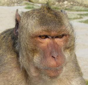 обезьяны в Таиланде