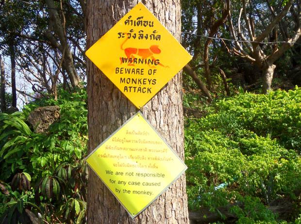 предупреждение об атаках обезьян