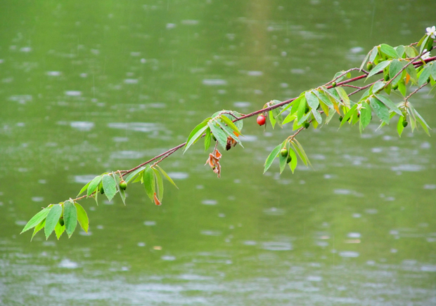 ветка над озером