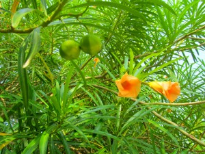 весна в Хуа Хине