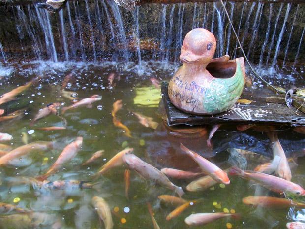 храм черепахи