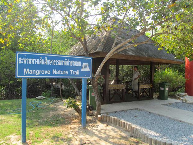 мангры около Хуа Хина