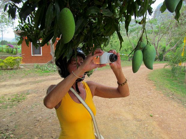 фото тайского манго