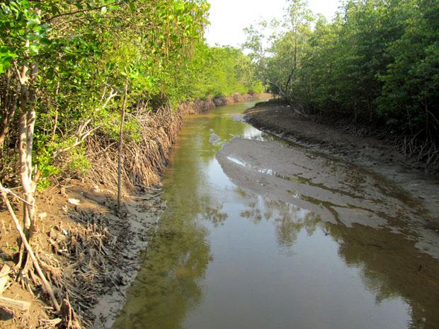 мангровый лес в хуа хине