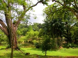 парк в Куала-Лумпуре
