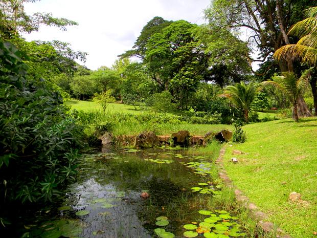 ботанический сад в Азии