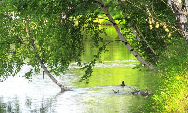 пейзаж в Сусляндии