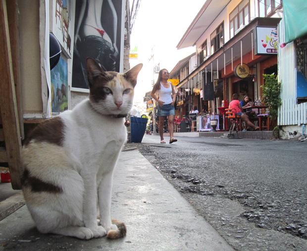 кошки в Хуа Хине
