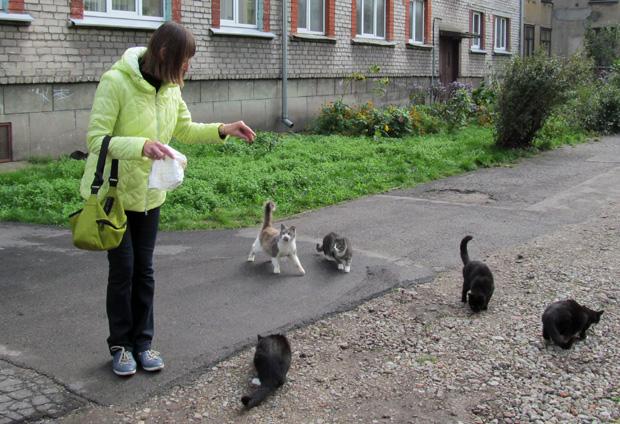 кошки в Латвии