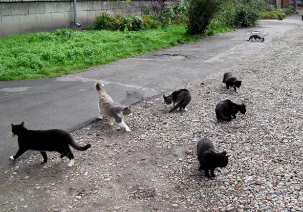 кошки в Лиепае