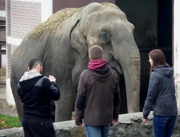 слон в зоопарке Белграда