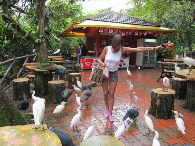 птицы в кафе