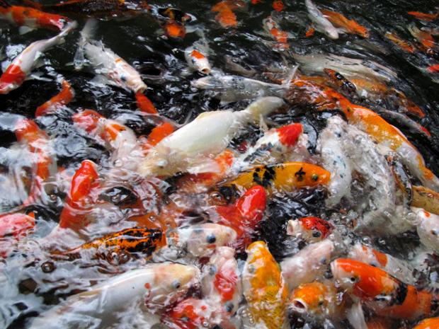 рыба кишит
