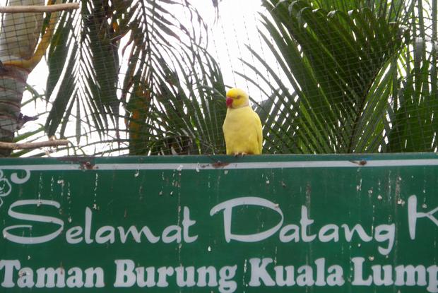попугай в парке птиц