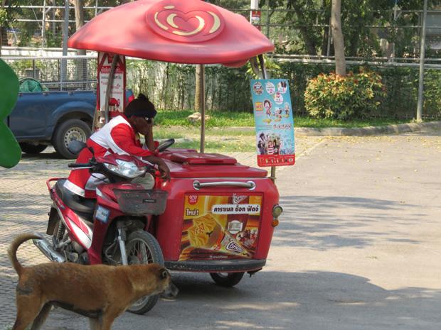 Hua Hin dogs shenter