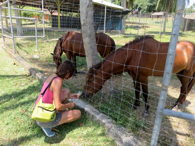 лошадки в мини-зоопарке