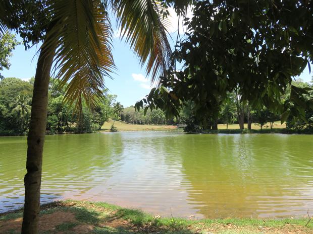 озеро возле зоопарка