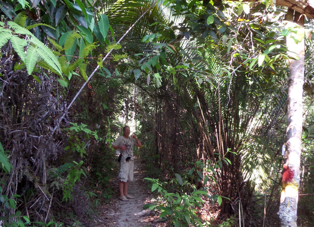 джунгли на пенанге