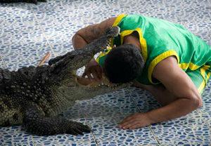Crocodile & Snake Show
