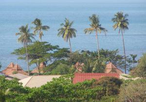 пальмы на Ко Чанге