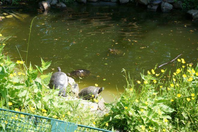 приют для животных в Гамбурге