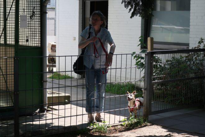 собачий приют в гамбурге